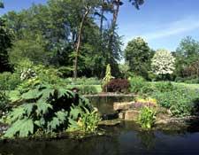 Large Garden 5